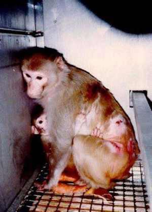 Risultati immagini per no vivisezione